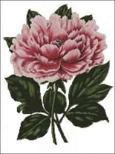 Vintage pink peony cross stitch chart