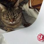 Red temari and cat