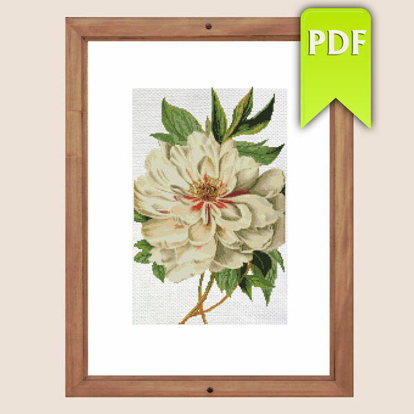 Vintage botanical white peony cross stitch pattern
